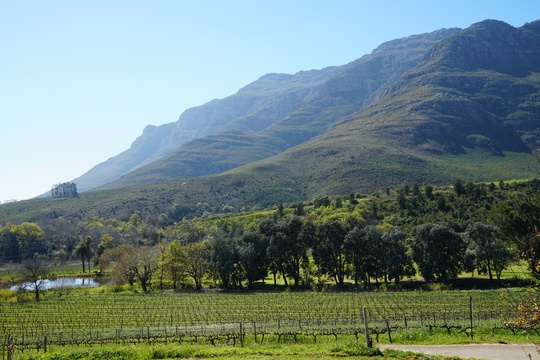 View on Vineyards and Stellenbosch Mountain from Mont Angelis Luxury Cottages